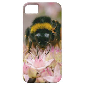 Bumblebee feeding on flower iPhone 5 cases