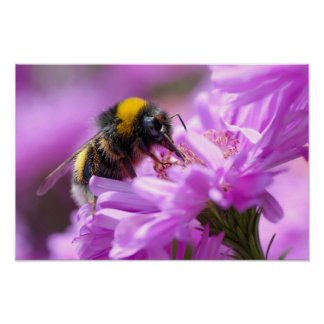 Bumblebee feeding on flower poster