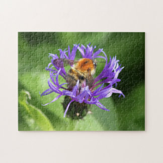 Bumblebee in Scottish Thistle on Green - Scotland Jigsaw Puzzle