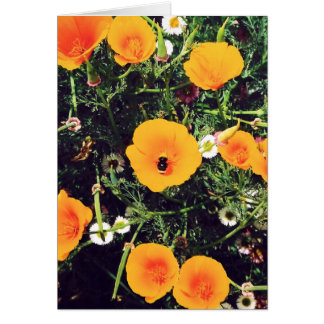 Bumblebee in the Poppies notecards Note Card