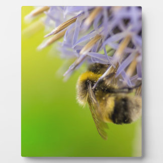Bumblebee on a flower plaque