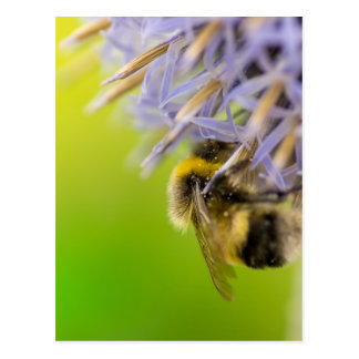 Bumblebee on a flower postcard