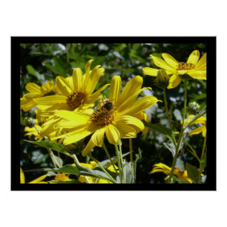 Bumblebee on a Sunflower Poster