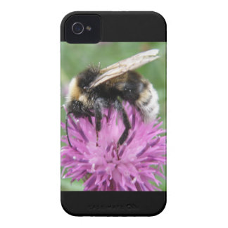 Bumblebee on a Thistle Blackberry Bold Case