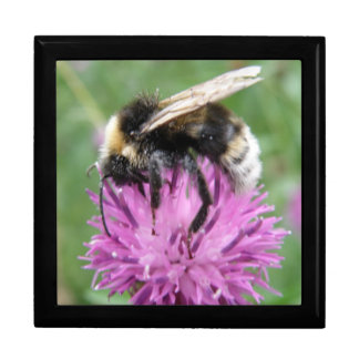Bumblebee on a Thistle Gift Box
