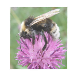 Bumblebee on a Thistle Notepad