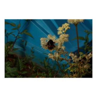 bumblebee on blue poster