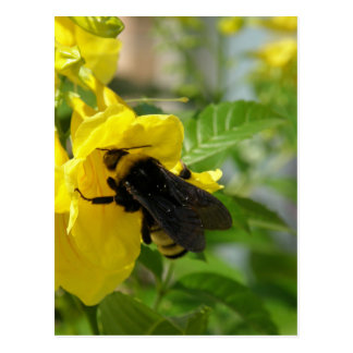 Bumblebee on Esperanza Flower Postcard