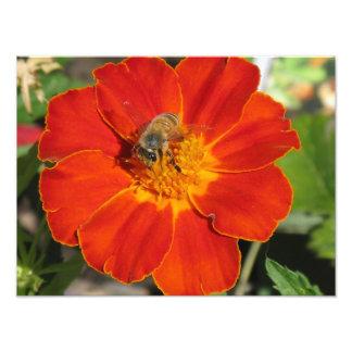 Bumblebee on Flower Photo