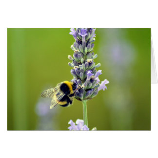 Bumblebee on Lavender Card
