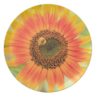 Bumblebee on sunflower, Community Garden Plates