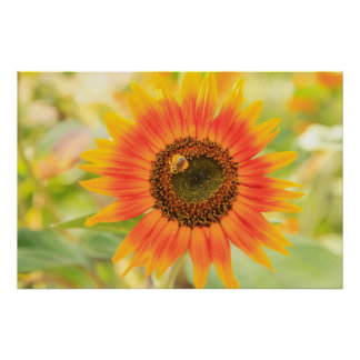 Bumblebee on sunflower, Community Garden Poster