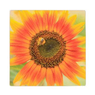 Bumblebee on sunflower, Community Garden Wood Coaster