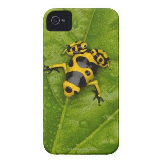 Bumblebee Poison Dart Frog iPhone 4 Case