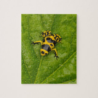 Bumblebee Poison Dart Frog Jigsaw Puzzle