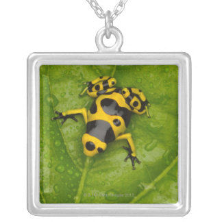 Bumblebee Poison Dart Frog Silver Plated Necklace