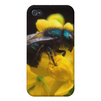 Bumblebee Pollinating iPhone 4/4S Case