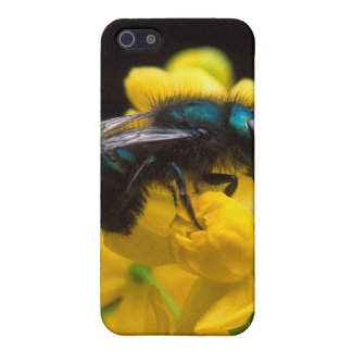 Bumblebee Pollinating Cases For iPhone 5