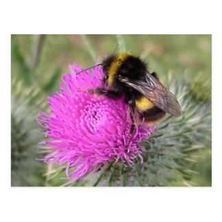 Bumblebee Postcard