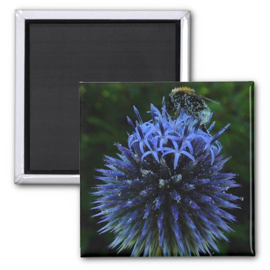 bumblebee square magnet