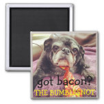 Bumblesnot magnet:  got bacon? square magnet