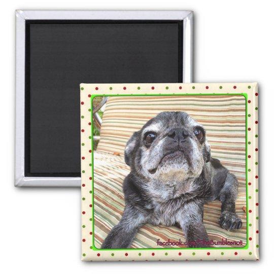 Bumblesnot magnet:  Sitting Puggy Magnet
