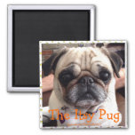 Bumblesnot magnet: The Itsy Pug Square Magnet