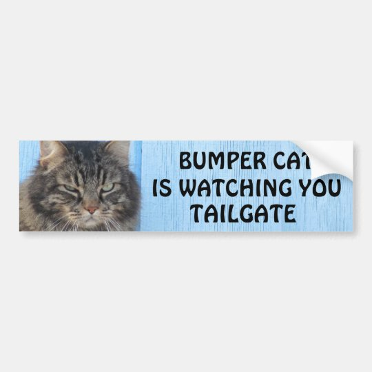Bumper Cat is watching TAILGATE 6 meme Bumper