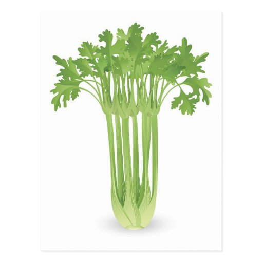 Bunch of celery illustration post cards