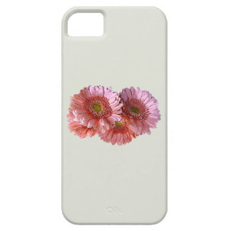 Bunch of Pink Shasta Daisies iPhone 5 Cover