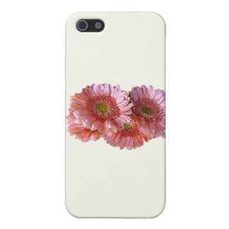 Bunch of Pink Shasta Daisies Cover For iPhone 5