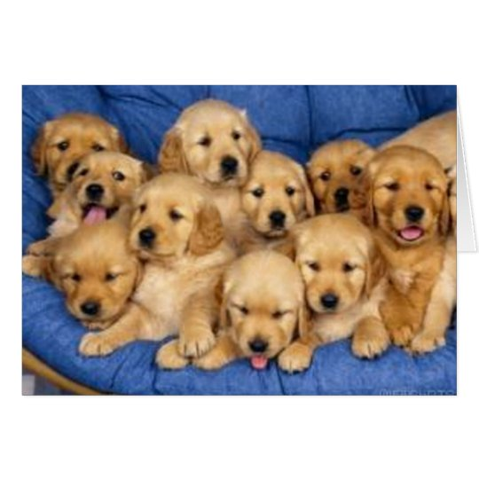 bunch of retriever puppies card