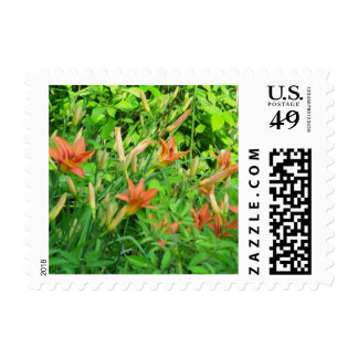 Bunch of Tiger Lilies - Postage Stamp