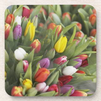 Bunches of colorful tulips drink coasters