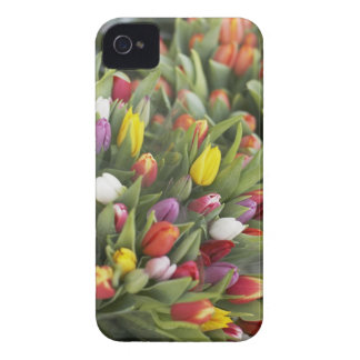 Bunches of colorful tulips iPhone 4 cover