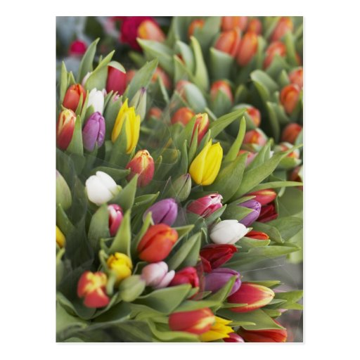 Bunches of colorful tulips post cards
