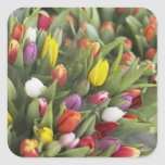 Bunches of colourful tulips square sticker