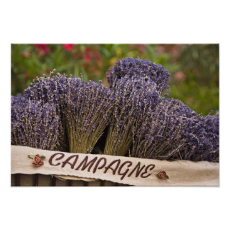 Bunches of lavender for sale, Vence, Provence, Poster