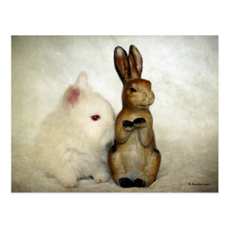Bunnies Postcards