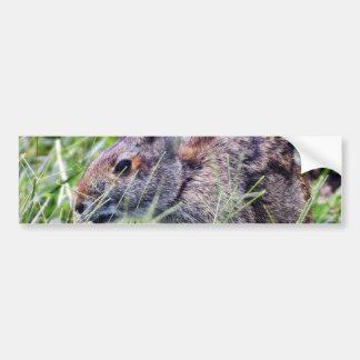 Bunny Bunnies Rabbits Bumper Stickers