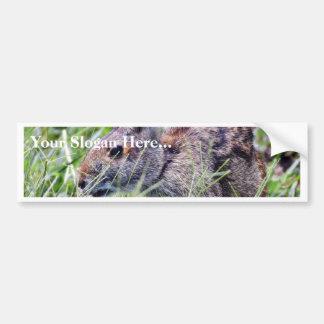 Bunny Bunnies Rabbits Bumper Sticker