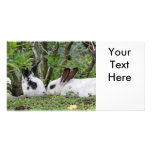 Bunny Couple Customised Photo Card