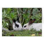 Bunny Couple Greeting Cards