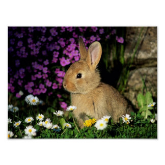 Bunny cute pet animal flowers blossoms garden poster