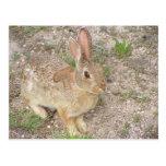 Bunny Fashion Model Post Cards