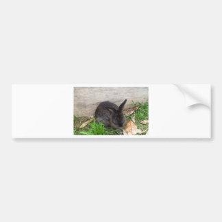 Bunny image bumper sticker