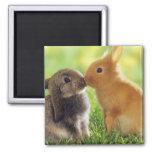 Bunny Kiss Fridge Magnets