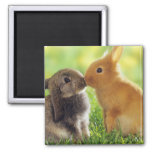Bunny Kiss Square Magnet
