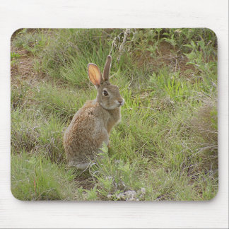 Bunny Looks Over Shoulder Mouse Mat