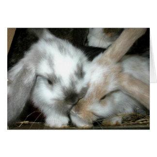 Bunny Love Anniversary Greeting Card